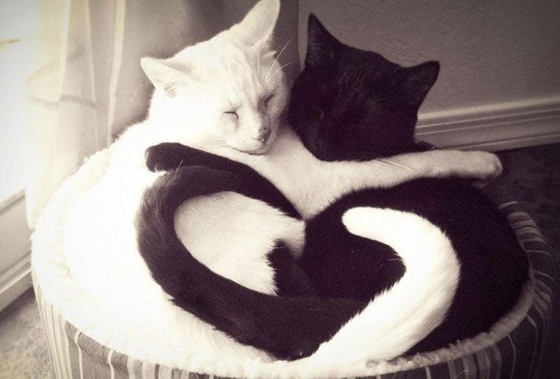 YinYang-Cats.jpg