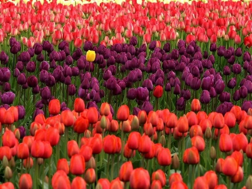 flowers-223494-edited.jpg