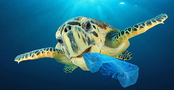 plastic pollution ruins everything satureday evening post